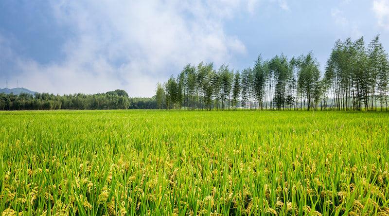 农村集体土地使用权转让